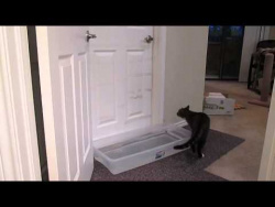 Nowhere Is Safe From This Cat That's Worked Out How To Open Doors