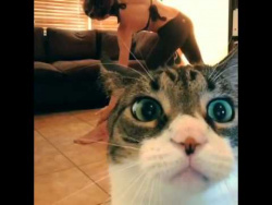 Cat interrupts yoga session