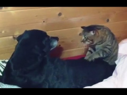 Cats Massaging Dogs Compilation