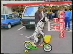 Dalmatian Riding a Bike