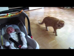 Cat meets a baby for the first time