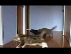Best Drift Cats!