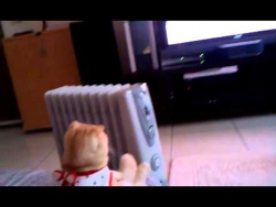 Don't Bother this Cat While She Watches TV