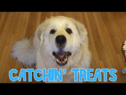 This Dog is the Worst at Catching Treats