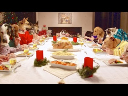 Watch 13 Dogs and 1 Cat Civilly Share a Holiday Meal