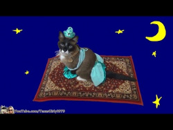 Cat dressed as Princess Jasmine rides a Roomba disguised as a flying carpet