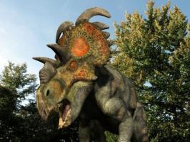 Albertaceratops dinosaur