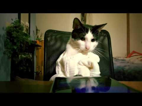This Incredibly Creative Cat Video Was Shot Entirely On A Windows Phone