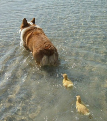 Follow the Fluffy Leader