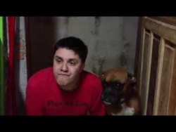 This boxer gets immitated by his owner and he is both confused and excited