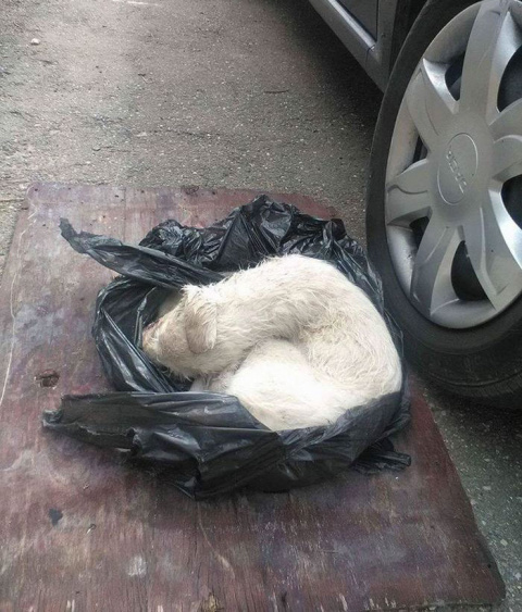 Puppy Found Beaten, Eaten By Maggots, And Tied In A Plastic Trash Bag, Finally Finds Happiness