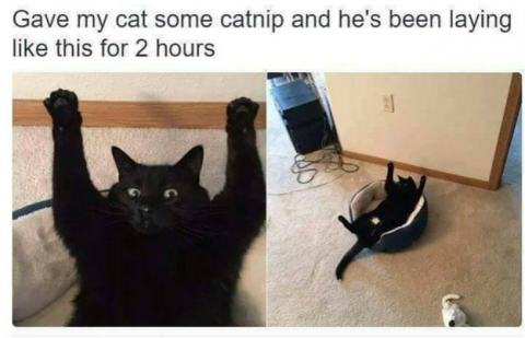 17 Reasons Why Black Cats Are Bad Luck