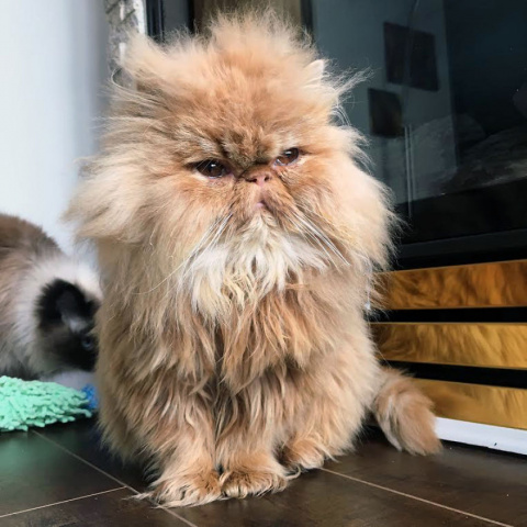 Lord Wellington – Chewbaccat…