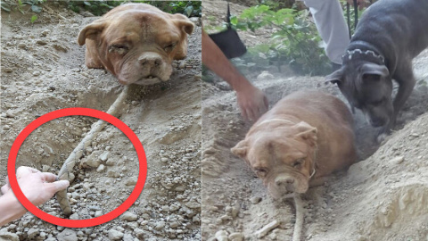 Dog Found Buried Alive Defie…