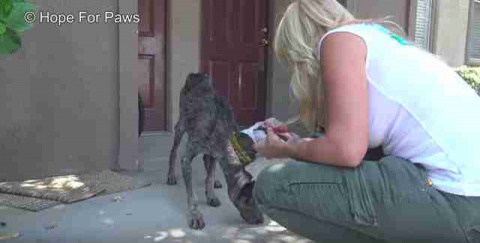 Starving Dog Found 2 Years A…