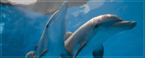 Dolphins: A Priceless Friend…