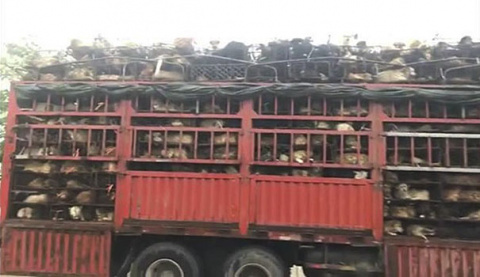 Guy Sees Truck Loaded With 1…