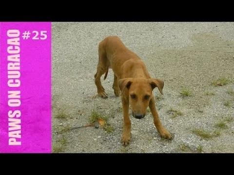Stray Dog Survives Car Accid…