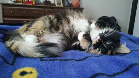 18 Cats Who Want You To Draw Them Like One Of Your French Girls