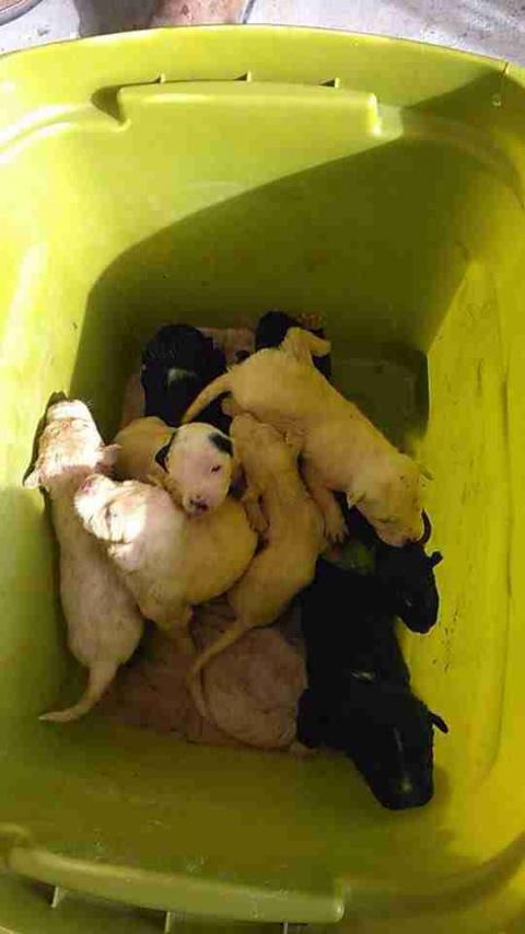Someone Threw 10 Tiny Puppie…