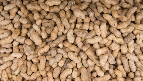 Scientists find peanut-eating prevents allergy, urge rethink