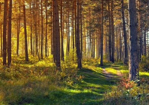 The Best Technology for Fighting Climate Change? Trees