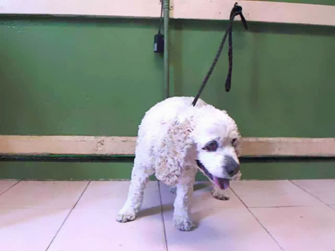 Dog Spends 20 Years Living With His Owner, She Dumps Him At Shelter For Being Too Old