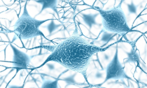 Brain damage could be repaired by creating new nerve cells