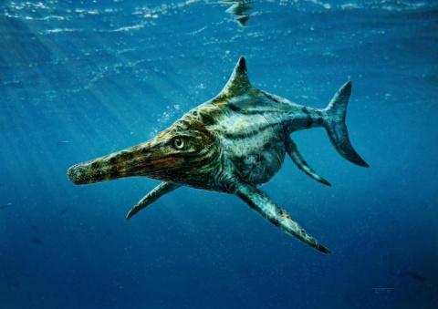 In Scotland, discovered new species of marine predators