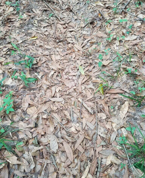 The Internet Is Going Crazy Trying To Find The Camouflaged Snake In This Picture – Can You Find It?
