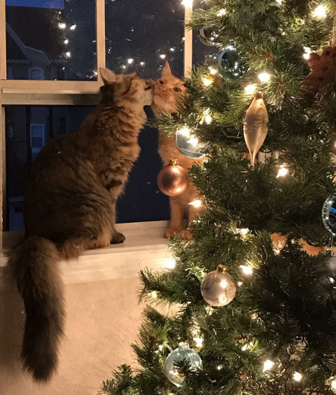 Two Kittens Kissed Near A Christmas Tree And Internet Went Crazy