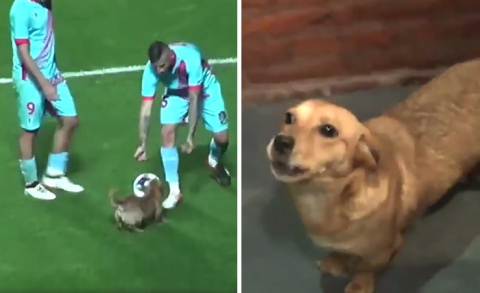 Random Dog Interrupts Soccer…