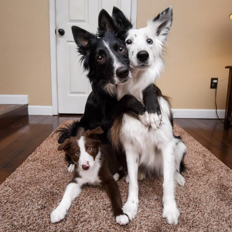 "Famous ""Hugging Dogs"" Can't Hold Their Excitement About Meeting Their New Baby Brother"