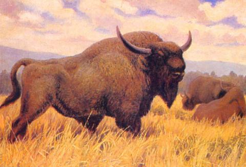 9,300-Year-Old Frozen Steppe Bison Found in Siberia
