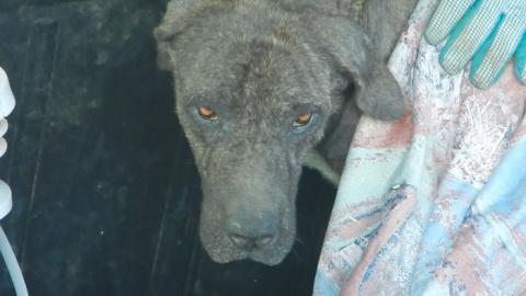 Dog Dumped As Trash Rescued
